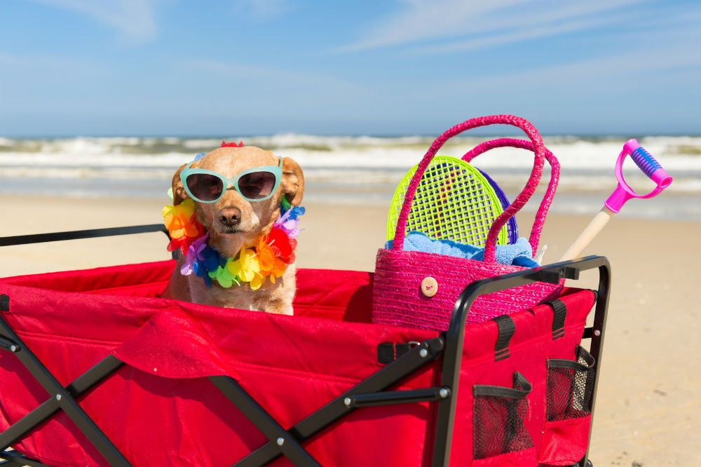 Review of the Mac Sports Heavy Duty Collapsible Folding All Terrain Utility Beach Wagon Cart