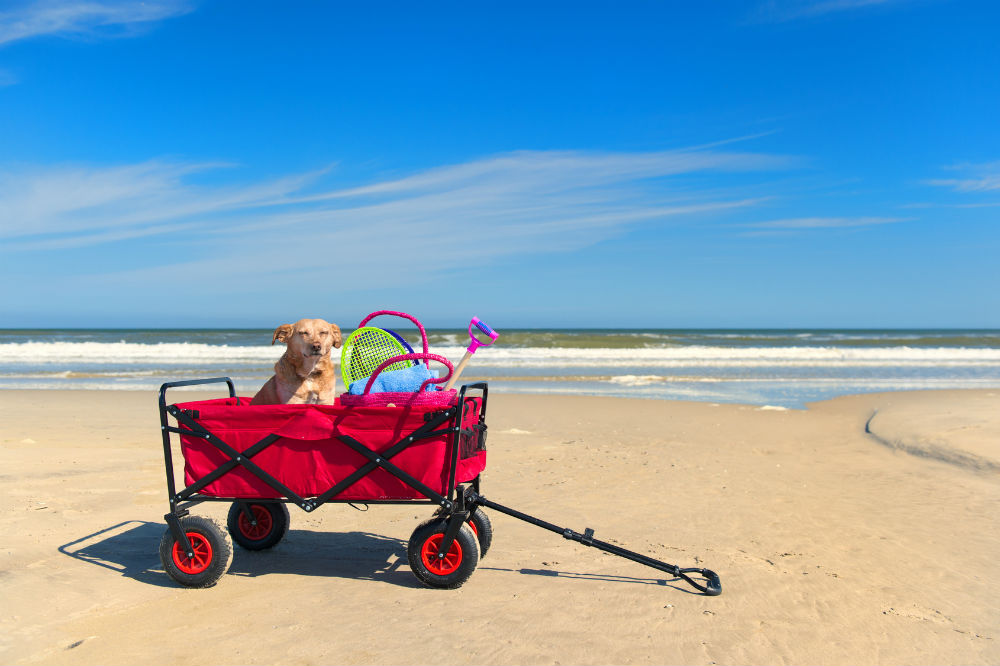 The Best Beach Carts